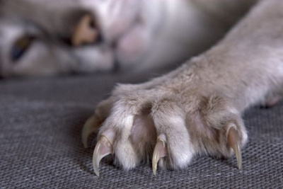 Stop cat from chewing fur
